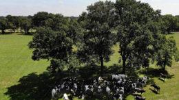 La plantación de árboles requiere una visión a largo plazo, ya que no ofrecen una solución inmediata, los árboles necesitan tiempo para crecer. Foto: Hans Prinsen