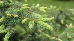 Los nuevos aglutinantes para piensos obtenidos de la biomasa forestal pueden utilizarse para aglutinar las partículas de los piensos. Foto: Anna Sadovskaia