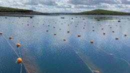 La empresa tiene cuatro granjas de algas: en Marruecos, India y dos en Irlanda. El año pasado se añadió otra ubicación de prueba frente a la costa de Scheveningen, en los Países Bajos. Foto: The Seaweed Company