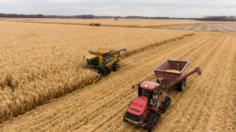 Apoyado por una creciente demanda de maíz como pienso, alrededor del 95% del maíz producido en el país se utiliza en la industria de piensos del país. Foto: Loren King