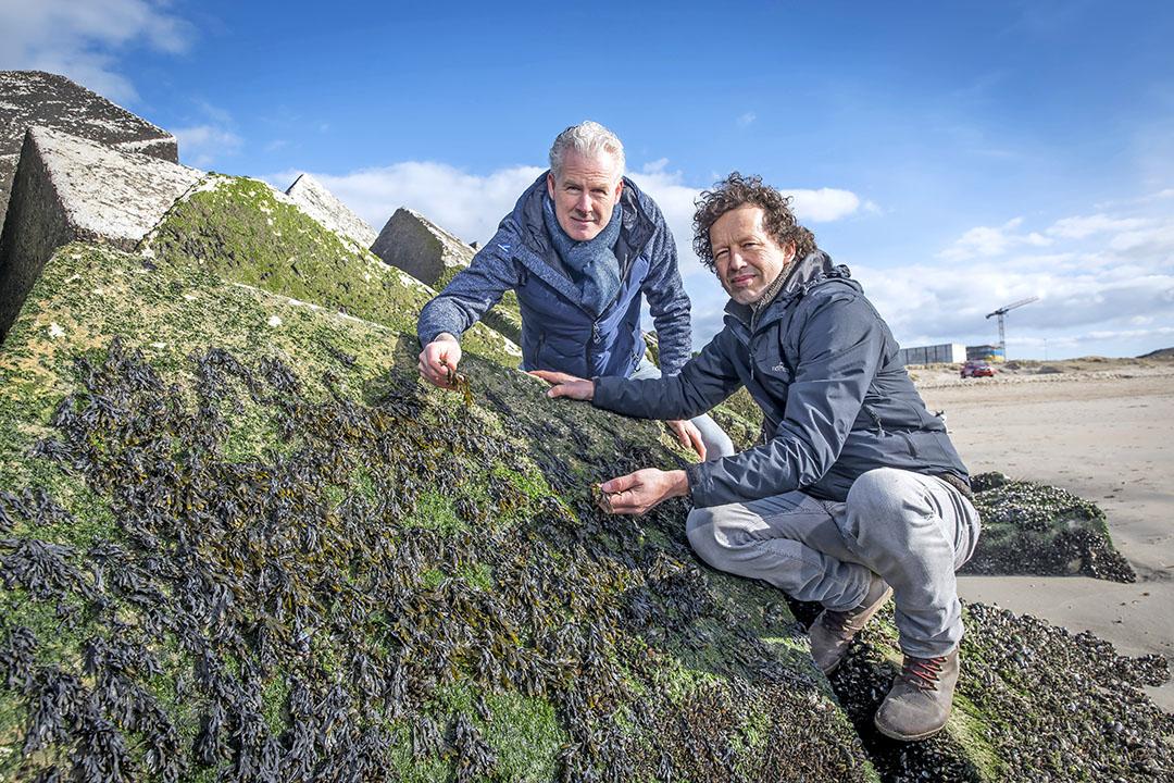 Edwin Sneekes (i) y Joost Wouters son dos de los tres fundadores de The Seaweed Company. Foto: Roel Dijkstra