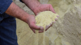 El gobierno brasileño intenta calmar al sector ganadero, que ha pedido una reducción de impuestos a la importación de cereales. Foto: Peter Roek