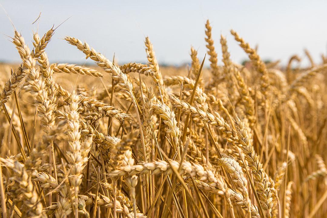 Todavía existen algunas dudas sobre si el uso del tratamiento radiactivo de los productos agrícolas es completamente seguro. Foto: Peter J.E.Roek