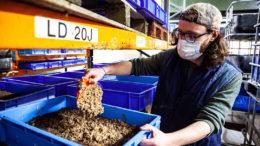 Joe Halstead, director general de AgriGrub, alimenta a los insectos con residuos de alimentos. Foto: Electric Robin