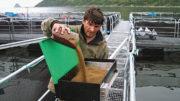 La calidad de los piensos para peces es un tema de gran preocupación en Rusia. Foto: Russian Fish
