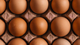El estudio rociará los huevos no eclosionados con un suplemento probiótico y proporcionará a las crías un suplemento adicional a través del agua. Foto: Erol Ahmed