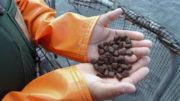 Los ingredientes vegetales de los piensos suelen estar contaminados con micotoxinas, lo que provoca riesgos para la salud. Foto: Dreamstime