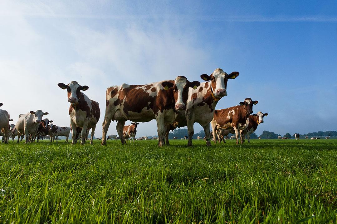 La producción de lácteos está creciendo en todo el mundo a un ritmo del 25%, pero este aumento conlleva mayores retos de sostenibilidad. Foto: Joris Telders