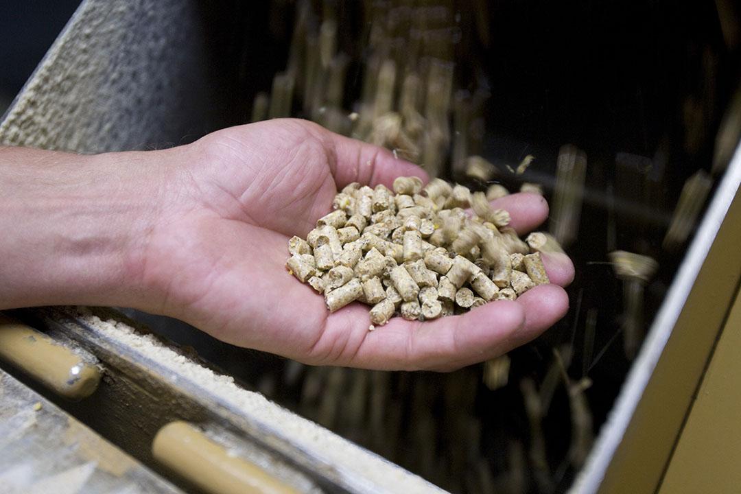La degradación por oxidación en los piensos puede tener lugar a lo largo de toda la cadena alimentaria y reduce la calidad de los ingredientes de los piensos. Foto: Koos Groenewold