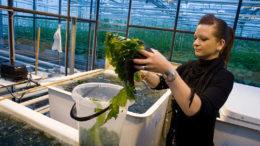 Las algas son una importante fuente de hidrocoloides. Estos carbohidratos solubles en agua aumentan la viscosidad de las soluciones para formar geles. Foto: Koos Groenewold