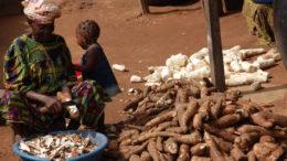 Una mujer en Nigeria pela la yuca para prepararla para su procesamiento. Foto: Adebayo O. T, IITA