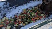 Los materiales de alta humedad, como los residuos vegetales, pueden parecer una ganga, pero pueden ser caros en base a la materia seca, por lo que los agricultores deben hacer sus deberes. Foto: Loop